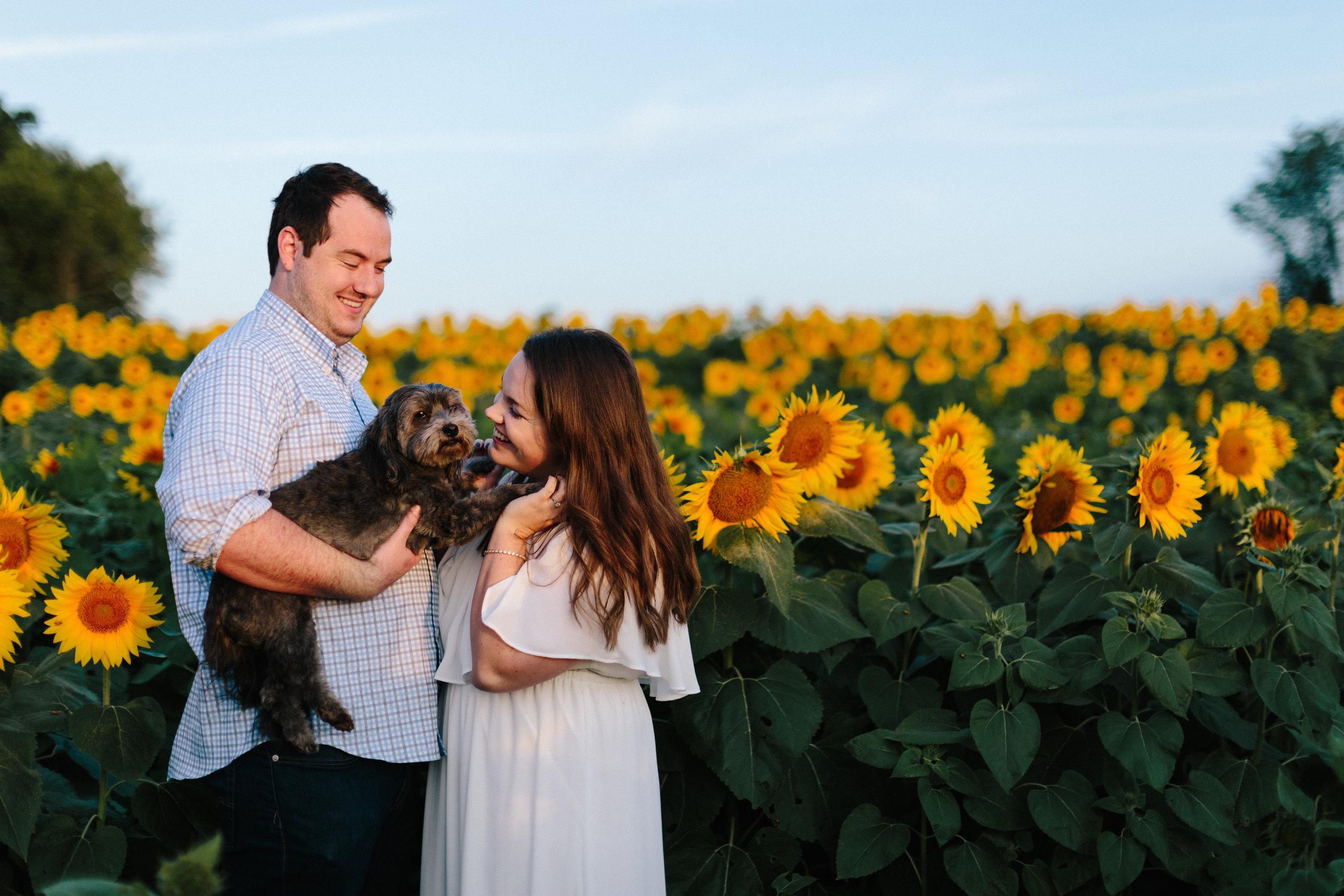 alyssa barletter photography sunflower field photos-2.jpg
