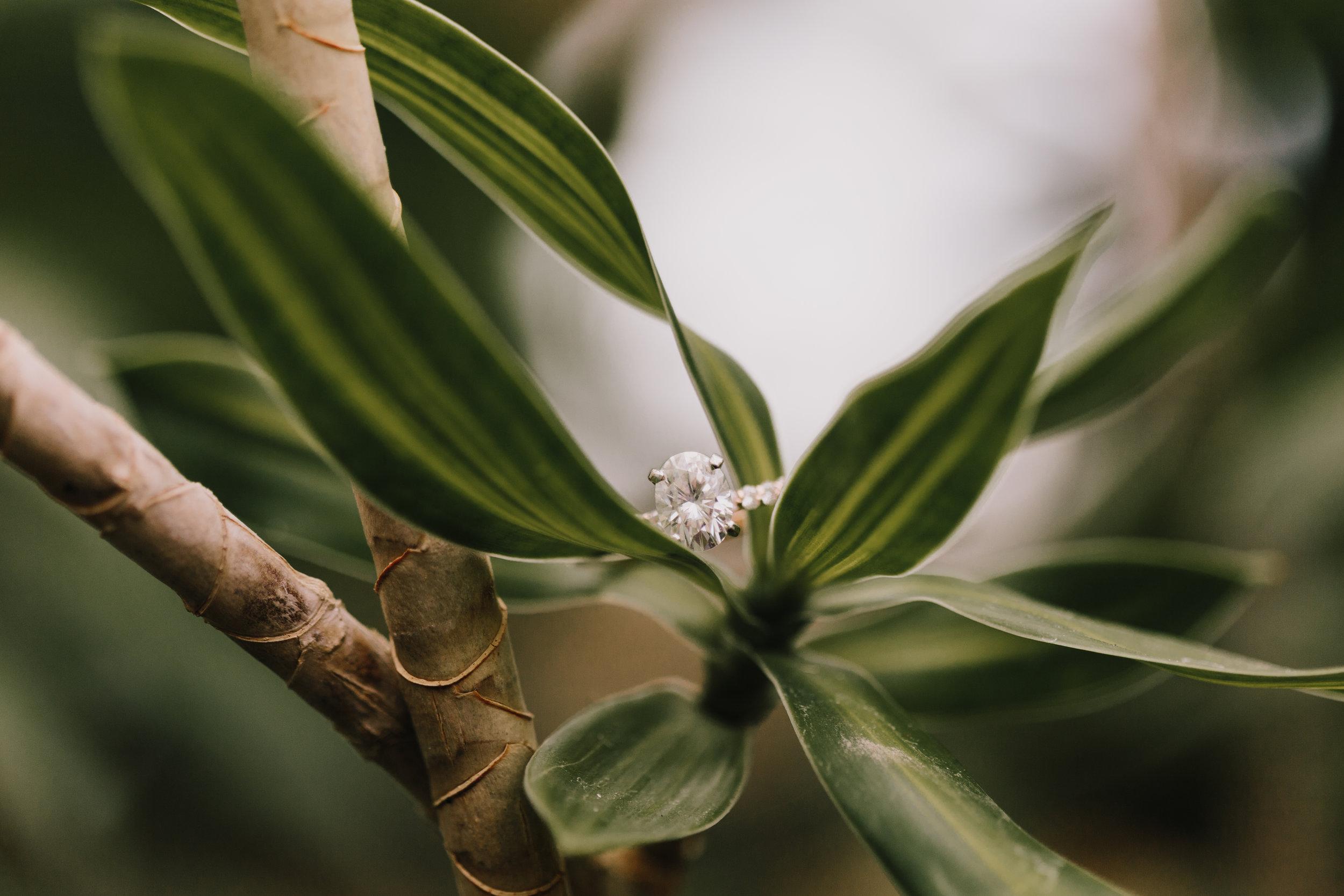 alyssa barletter photography greenhouse engagement photographer kansas city spring wedding-7.jpg