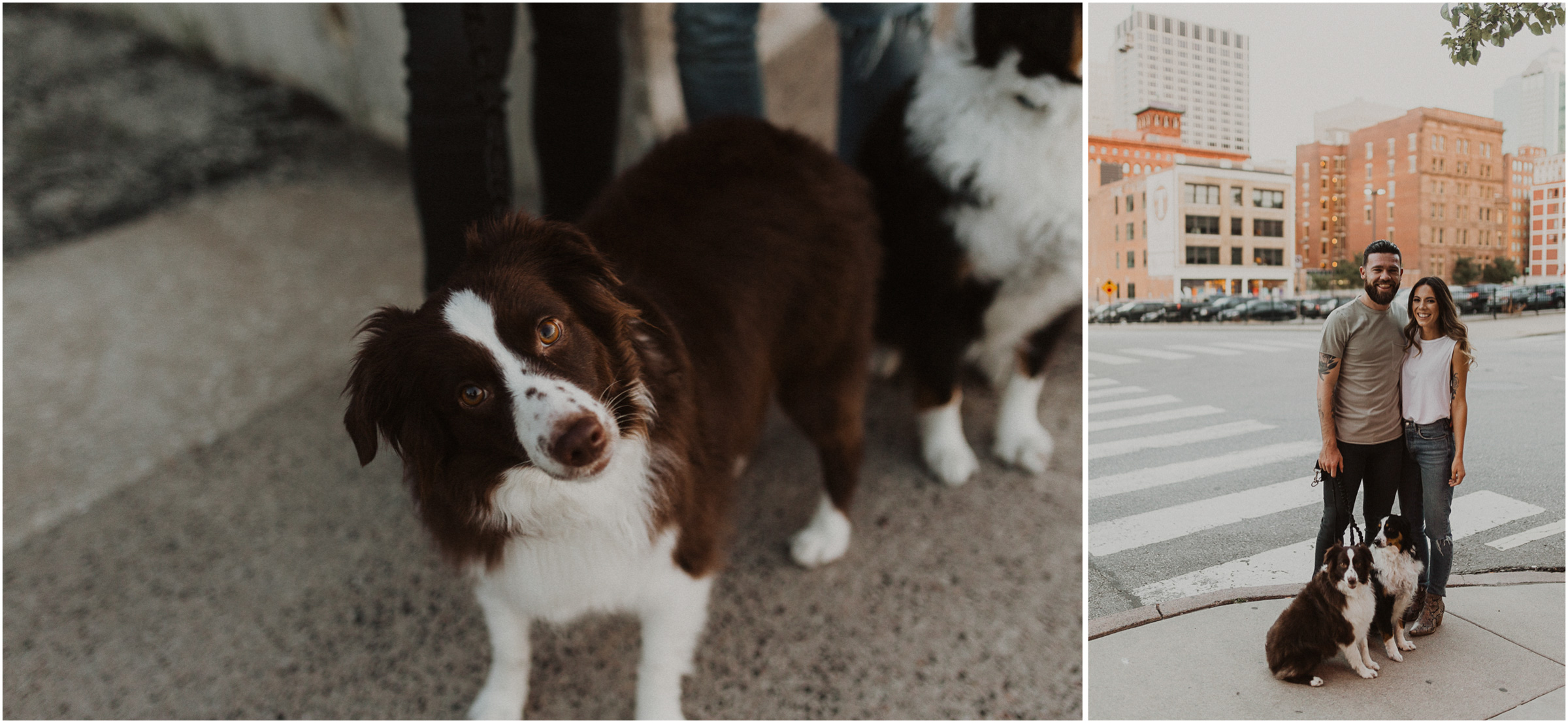 alyssa barletter photography downtown kansas city photos with couple and aussies austrailian shepards-15.jpg
