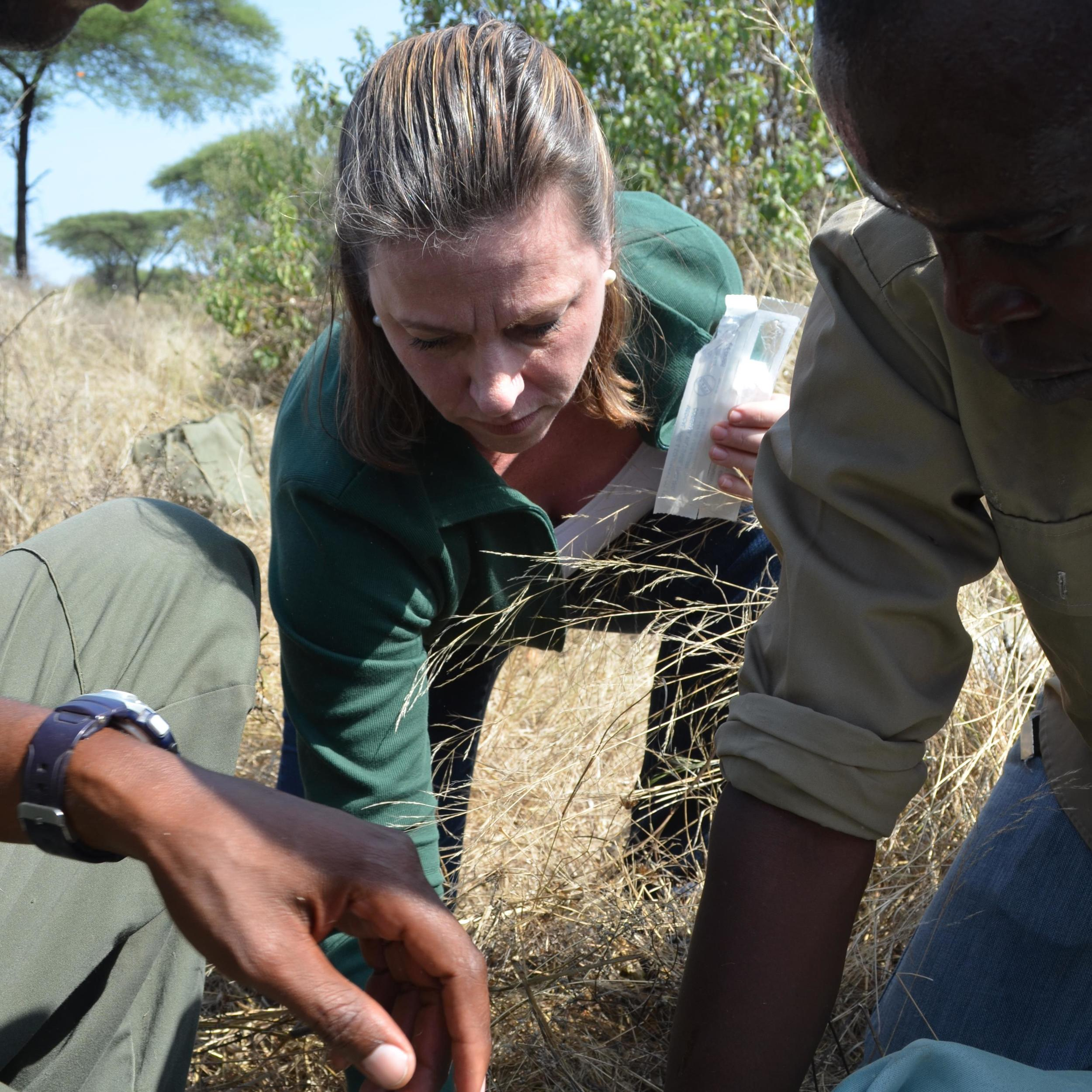 Jonna Mazet assisting Ruaha National Park and Sokoine University of Agriculture veterinarians with a giraffe immobilization.  Dr. Mazet has been integrating animal, environmental and human health in projects like HALI throughout the world,  building global foundations for One Health research and practice.