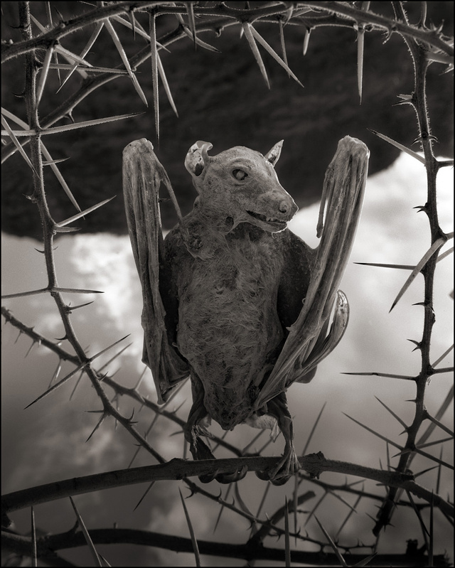 Our PREDICT team especially likes this mummified fruit bat.
