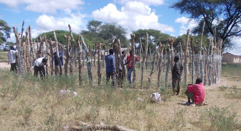 Ruaha Carnivore Project is helping pastoralists buildimproved bomas to prevent livestock predation.