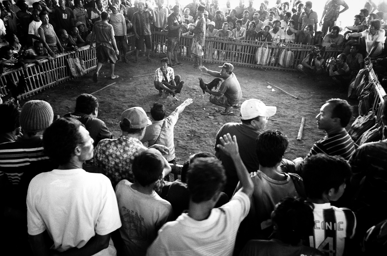 Amed, Bali, Indonesia. 2012.  Once the birds are ready to fight, they are placed face to face by their handlers. The spectators then begin chanting and placing bets on their favorite fighter.