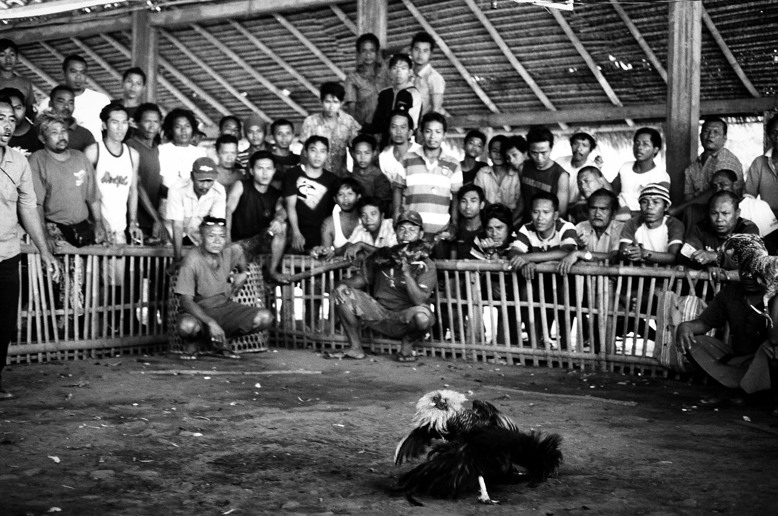 Amed, Bali, Indonesia. 2012.  Once the birds begin to fight the men watch intently and cheer for their fighter to win.
