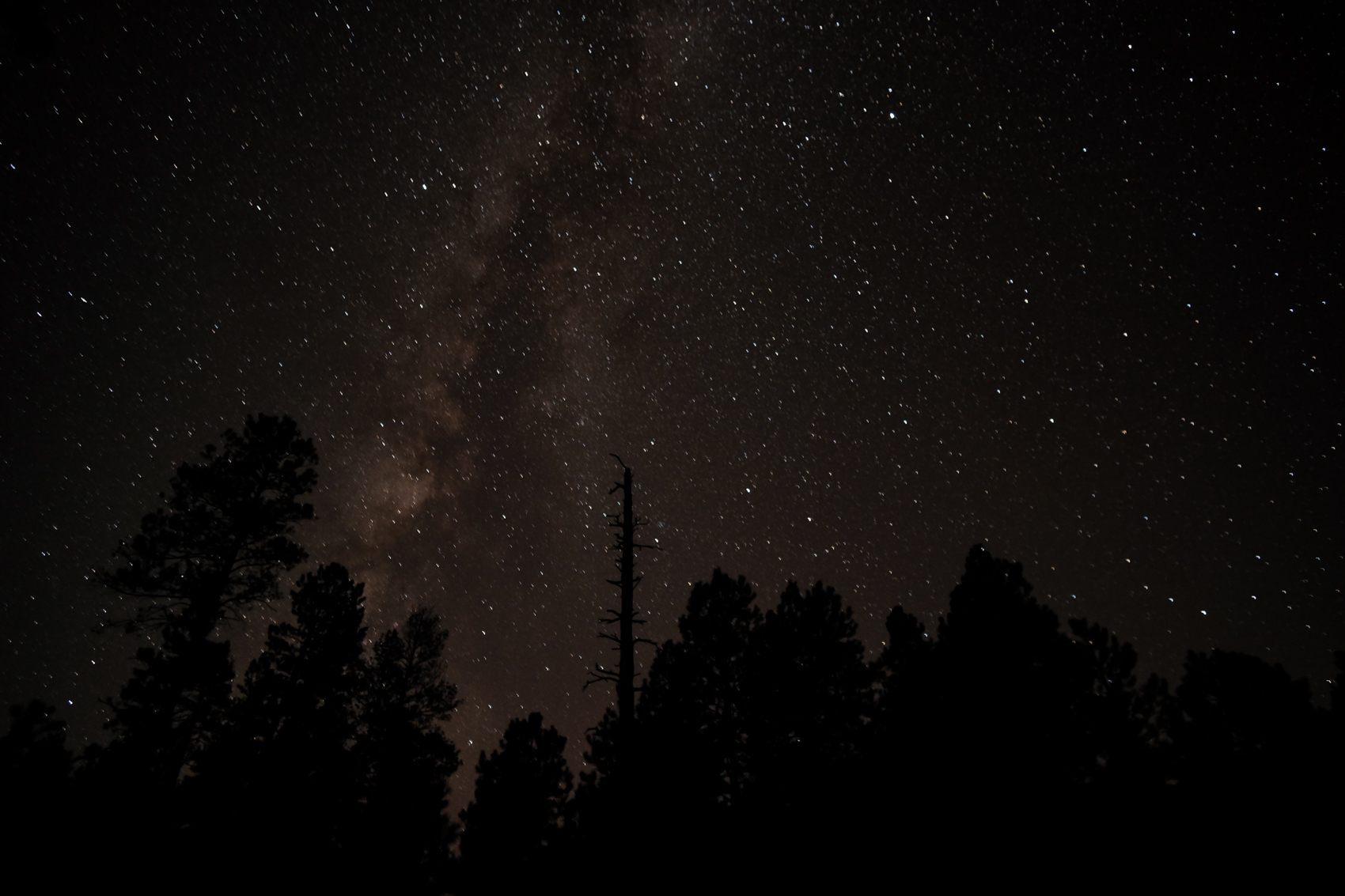 Kaibab National Forest, Arizona. September 2015.