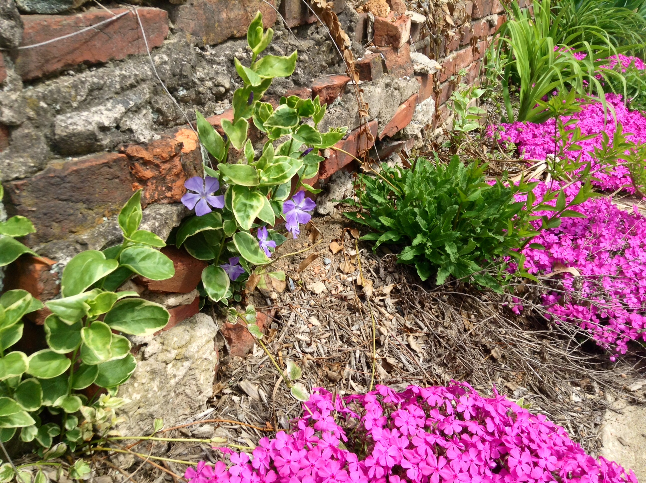 Flowers emerging on the side of a building in historic Ellicott City Maryland.