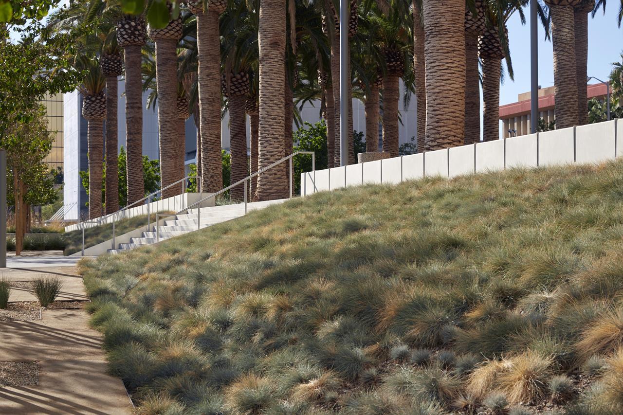 Grass Slope.jpg