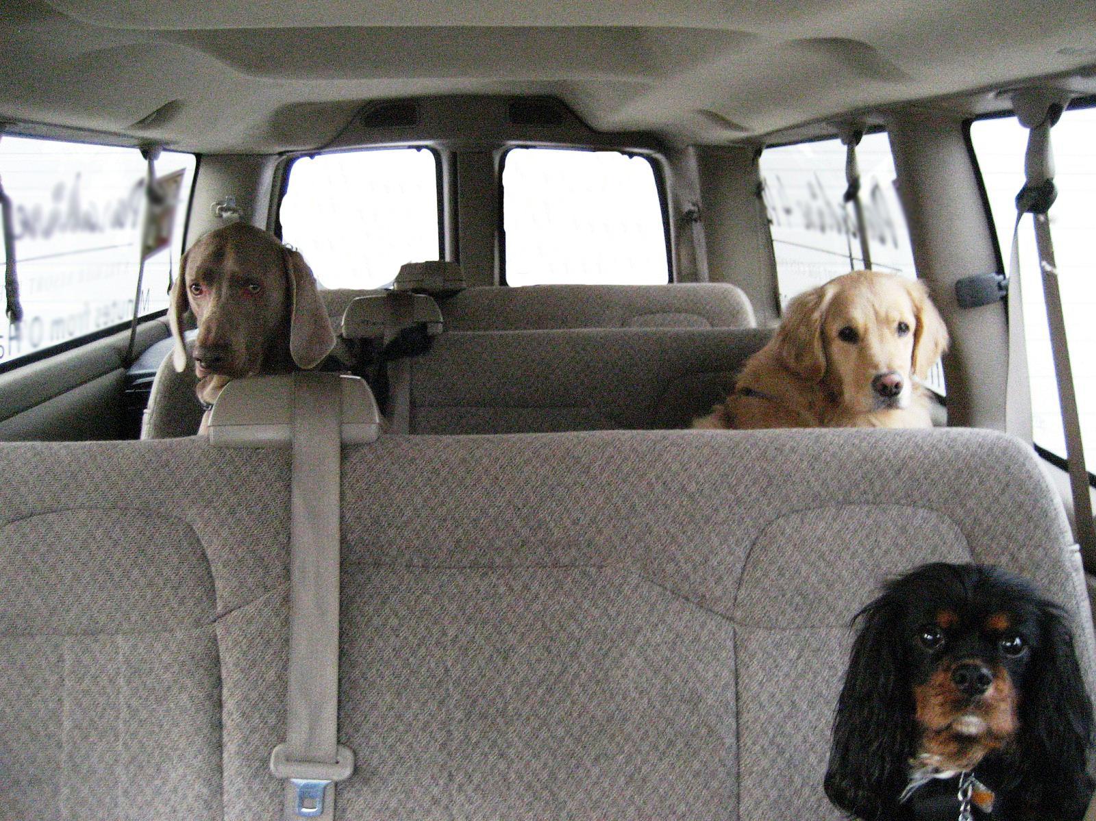 Shuttle-Dogs.jpg