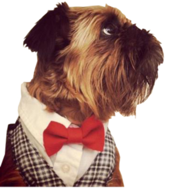 Business dog.jpg
