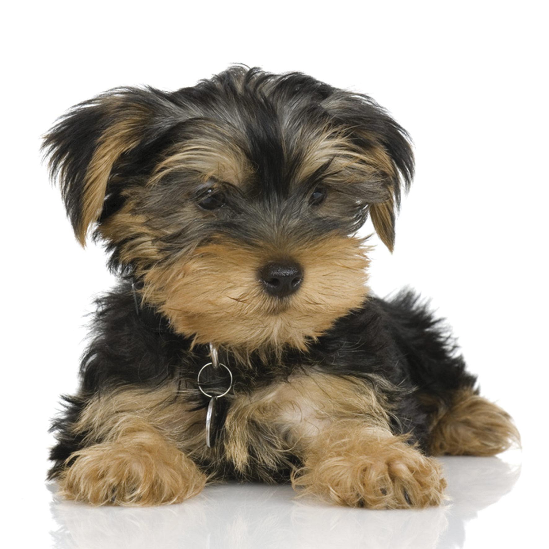 Tidy-Tails-Puppy.jpg