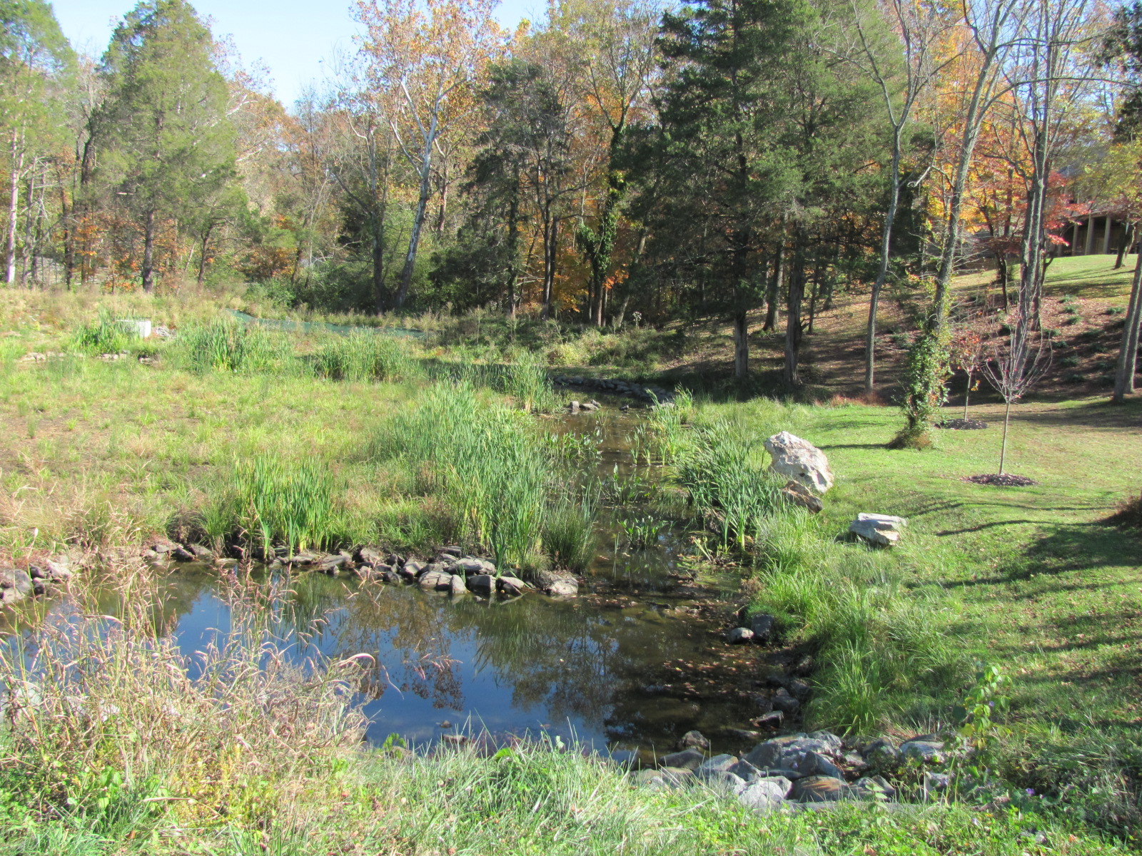 Stormwater Wetland, College Creek Watershed, Greeneville, TN