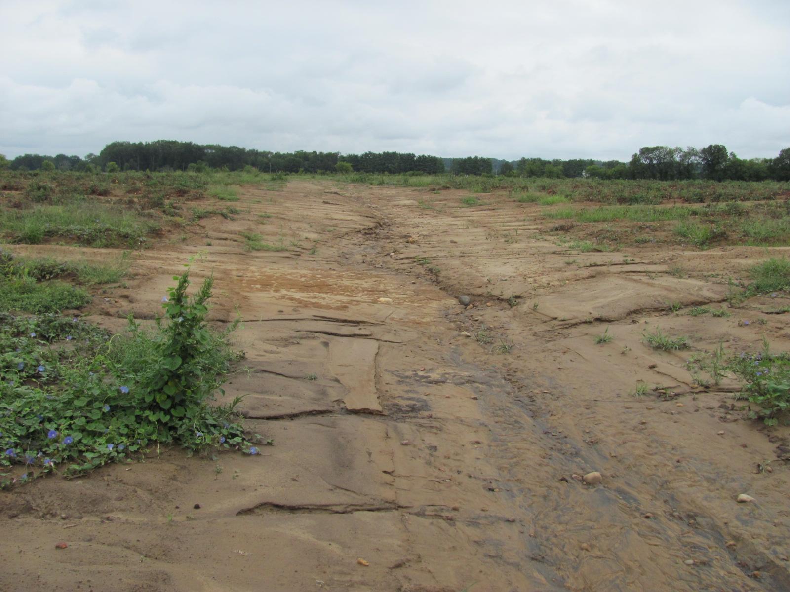 Shelton Farms, Hamblen County, TN. Erosion Prior to Project Implementation