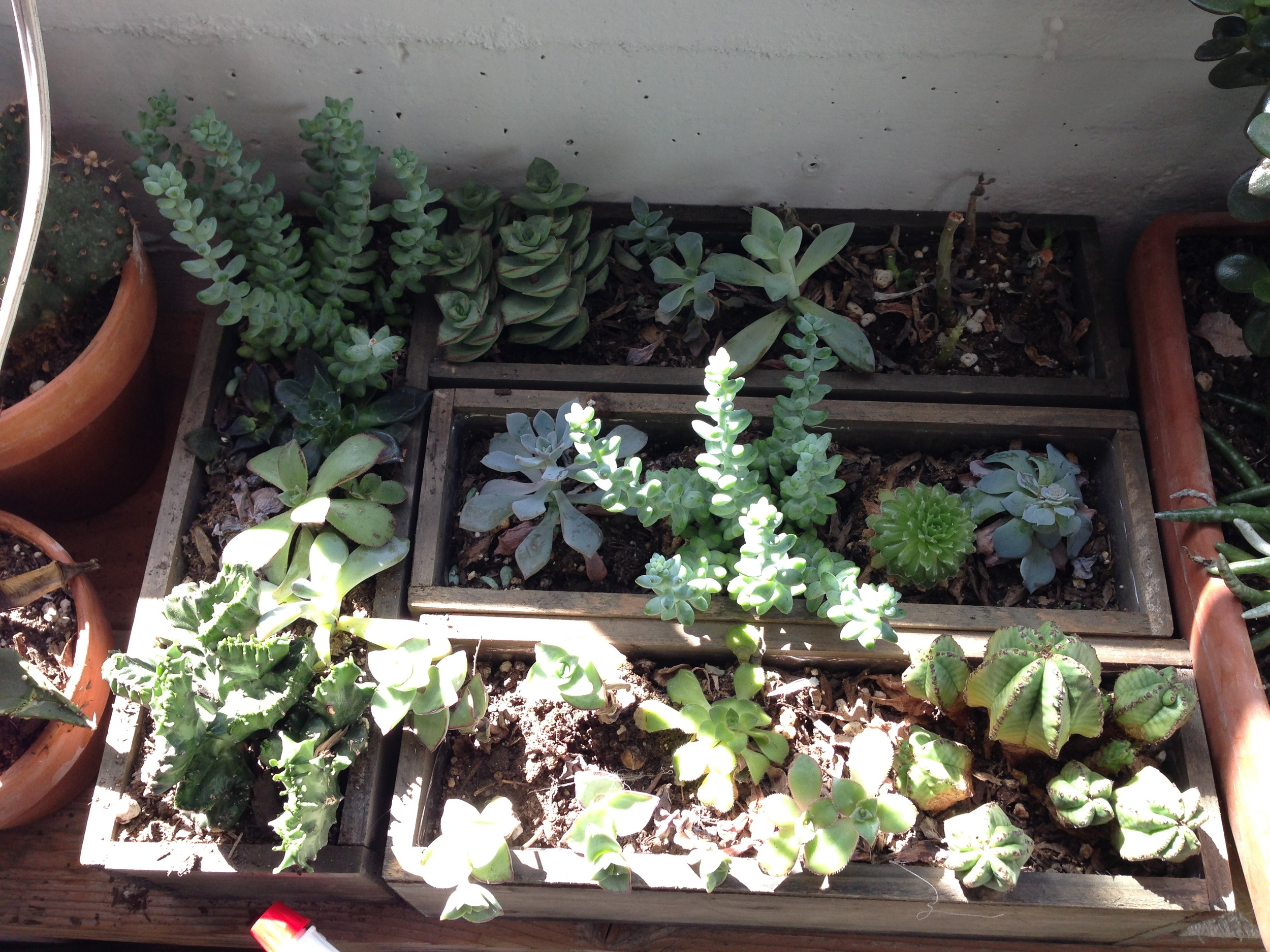 Succulents by the window keeping the studio beautiful.