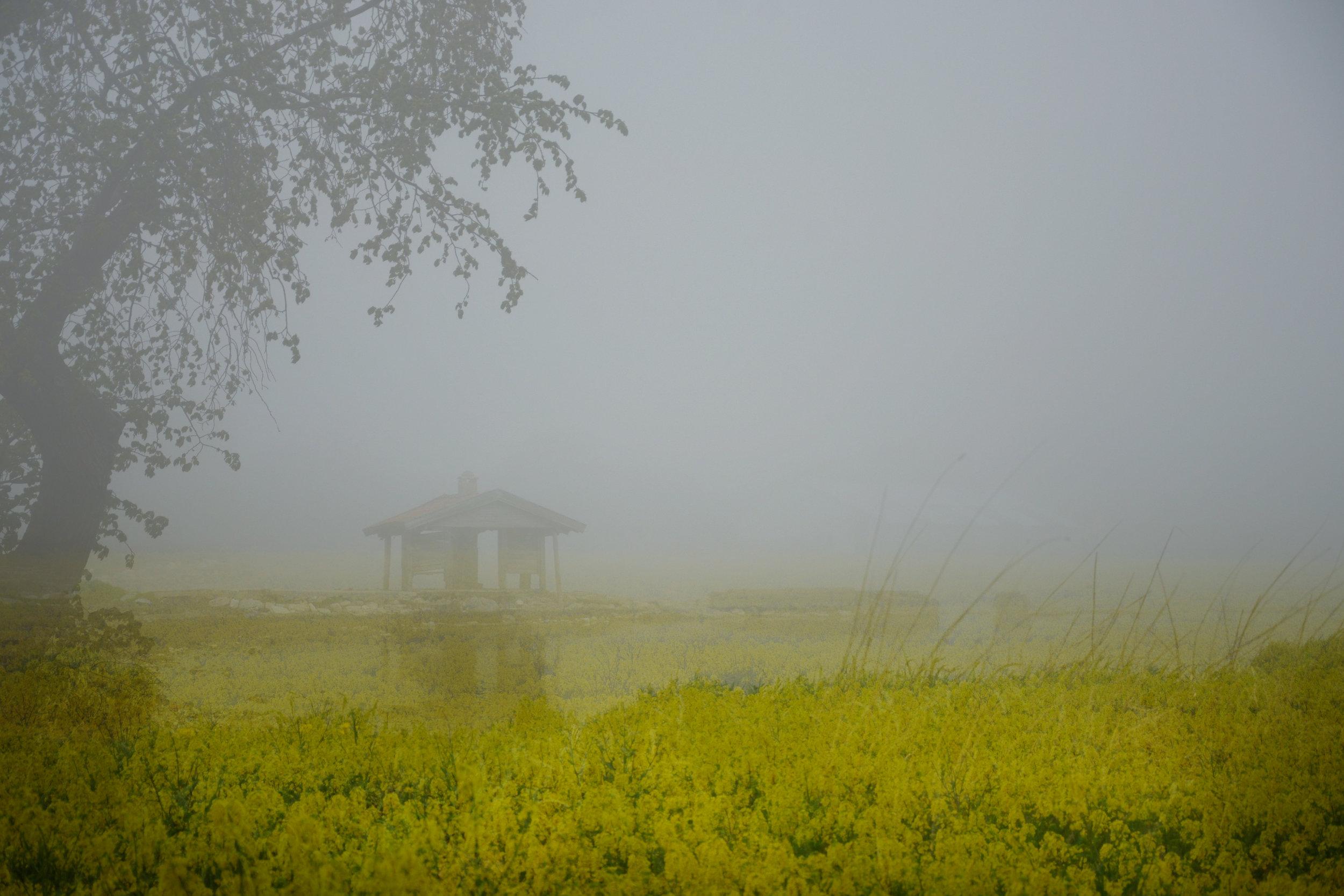 sort of fogg.jpg