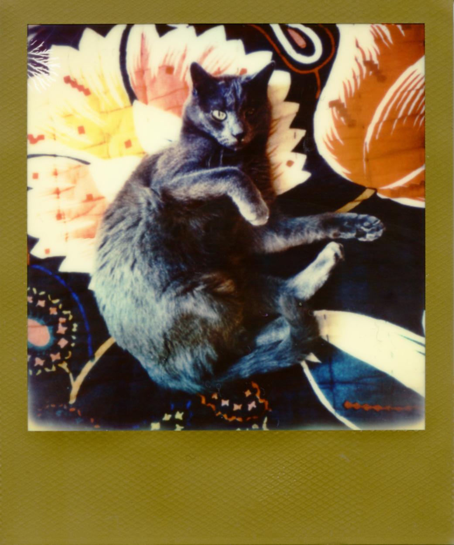 Polaroid174_web.jpg