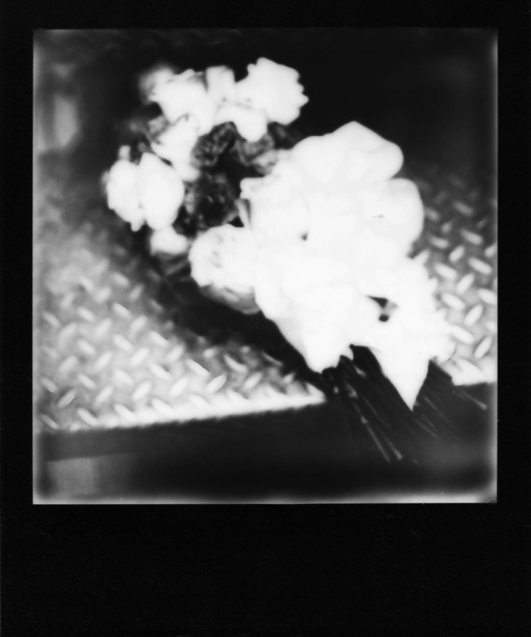 Polaroid192_web.jpg