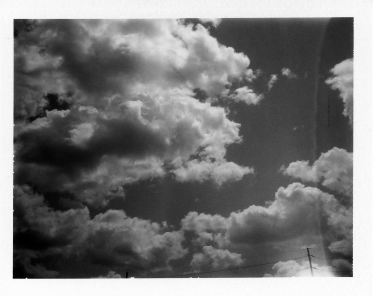 Polaroid255_flat.jpg
