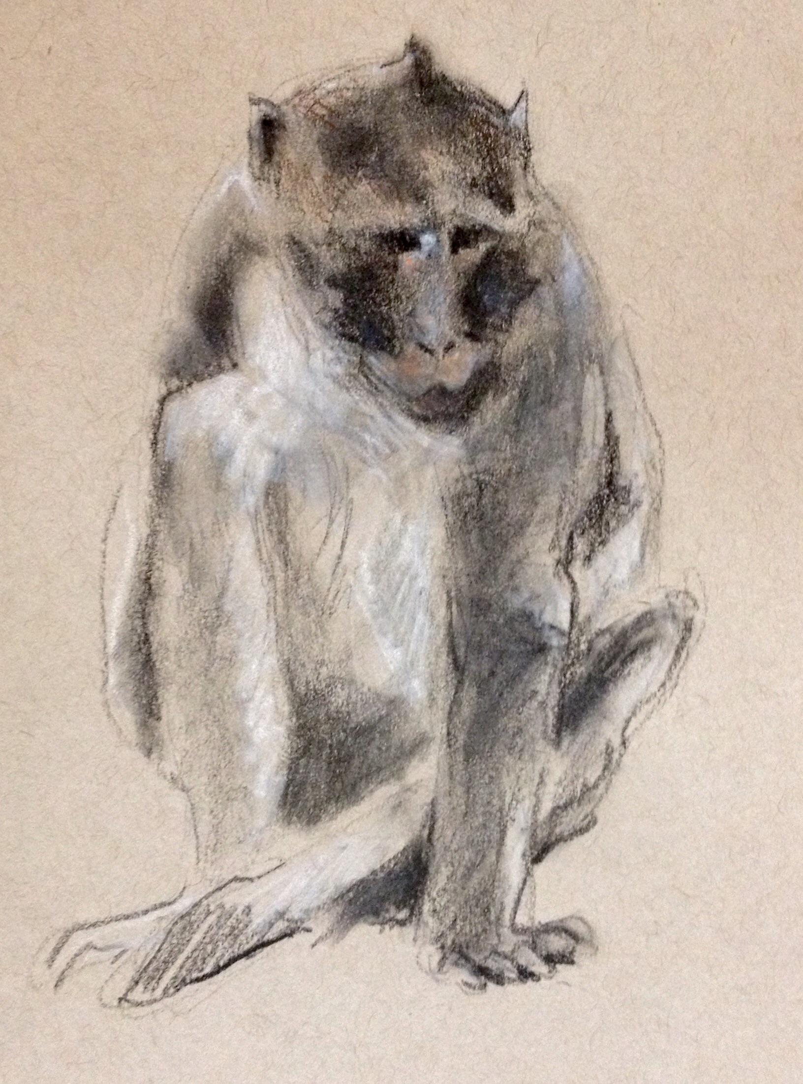 Long-tailed Macaque (Angkor Wat, Cambodia)