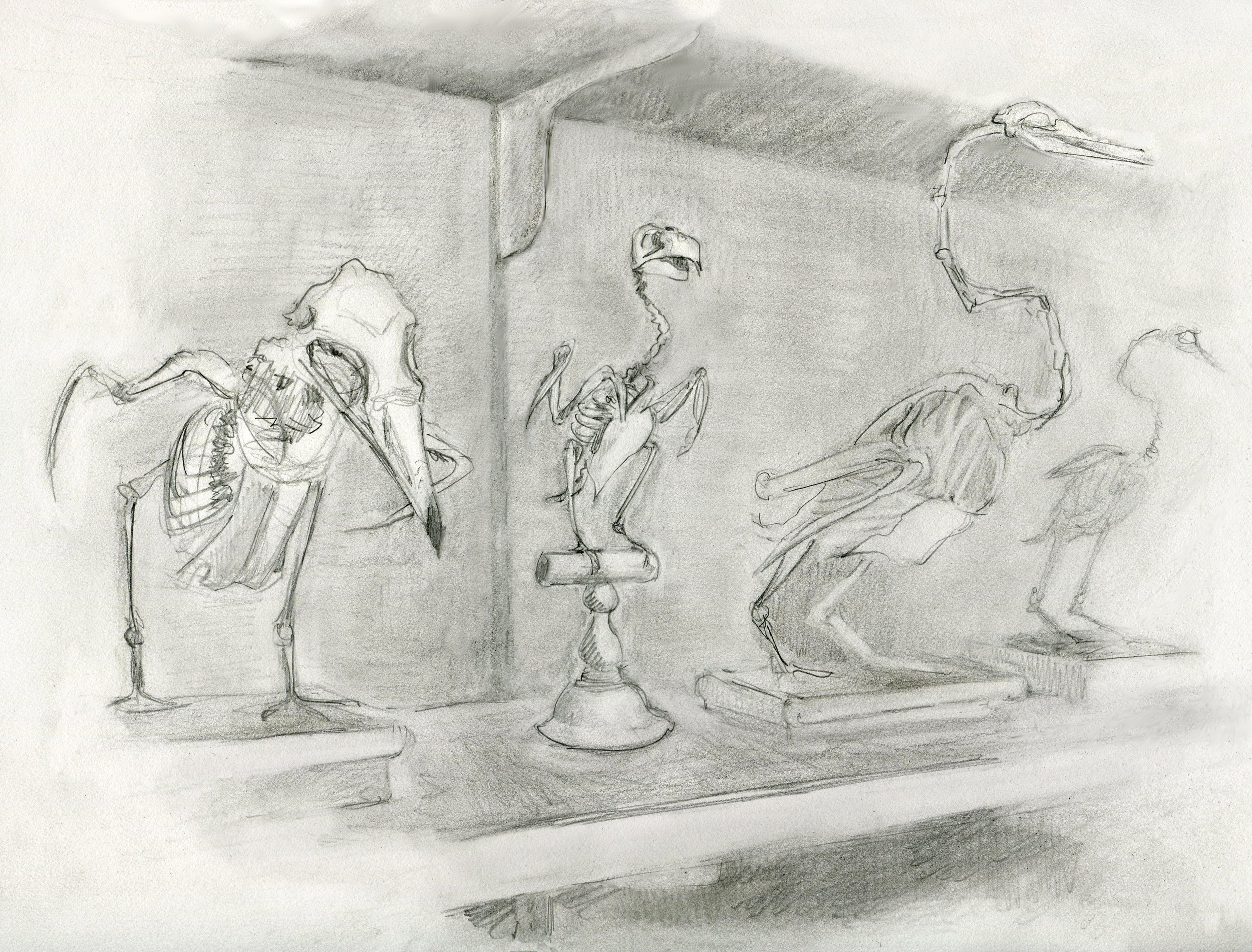 Skeletons at the MCZ