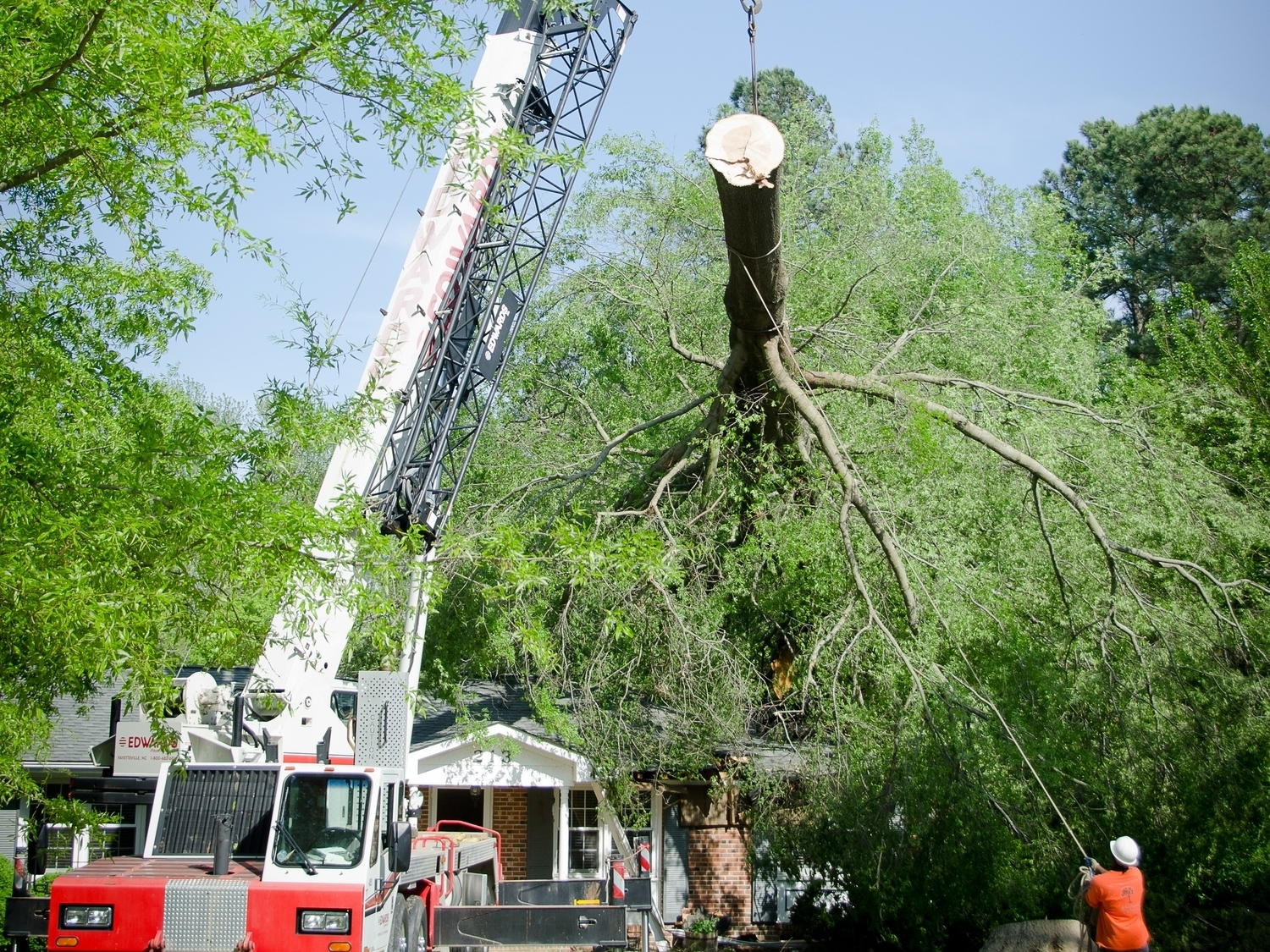 T R E E -  IGC can remove the most difficult trees from your house.