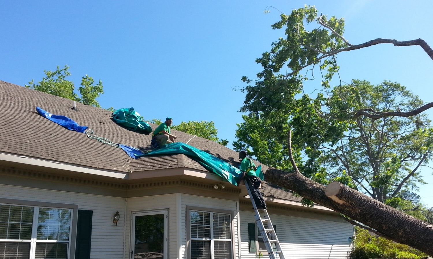 Tree removal and tarp installation