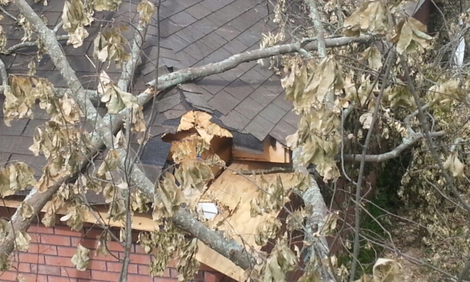 Tree debris removal and framing to close in roof to secure for waterproofing.
