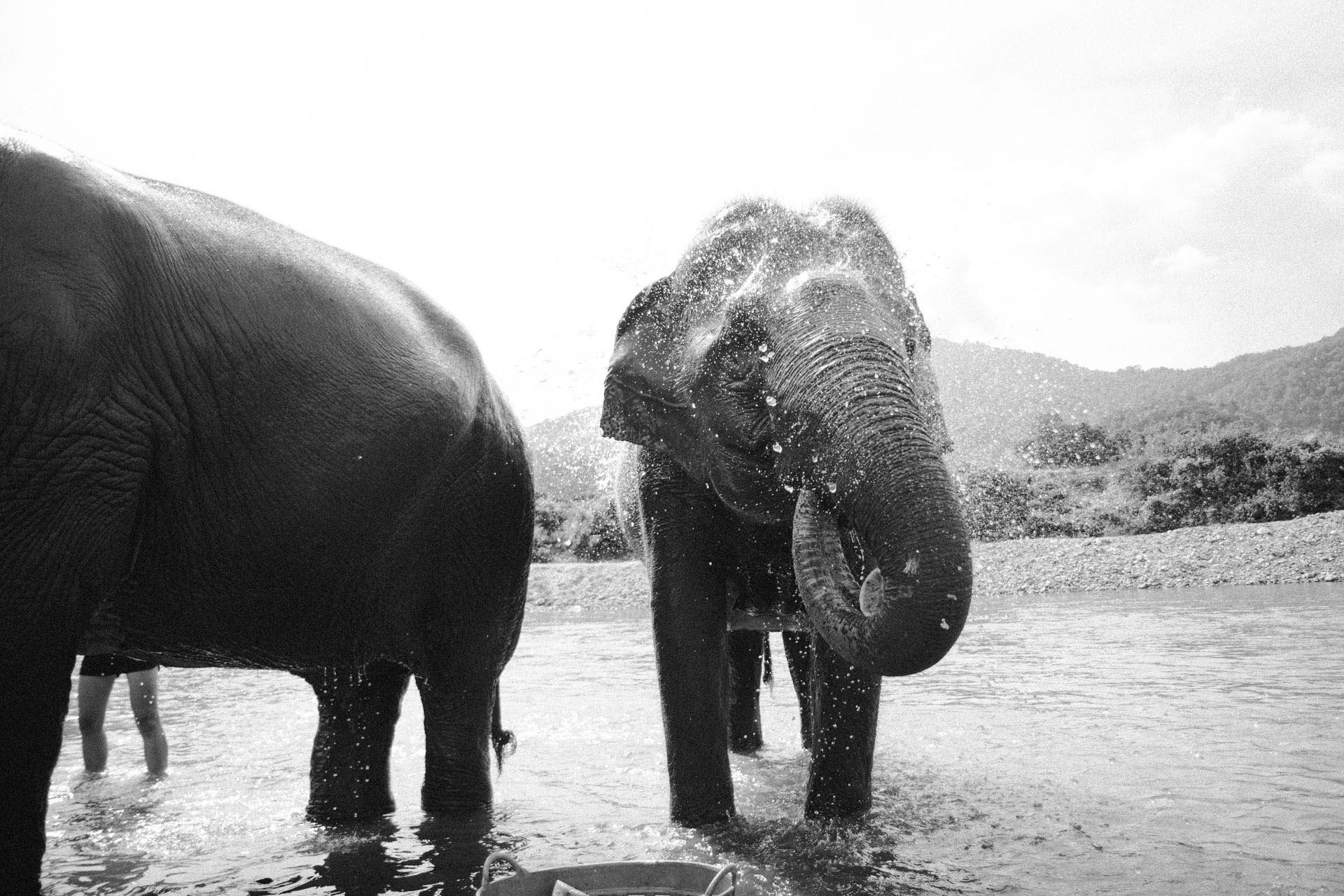 Ren Photography_Elephants_001.jpg