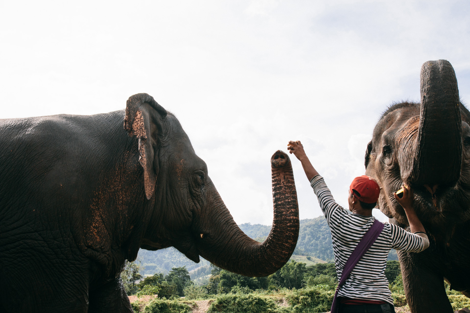 Ren Photography_Elephants_006.jpg