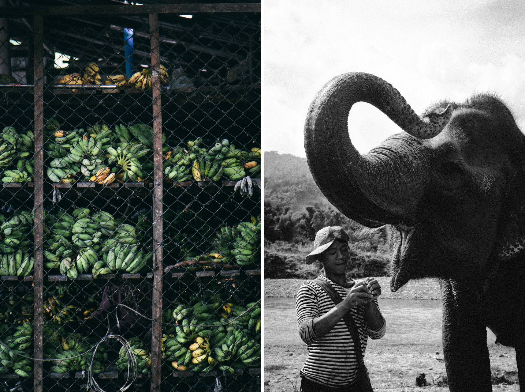 Ren Photography_Elephants_007.jpg