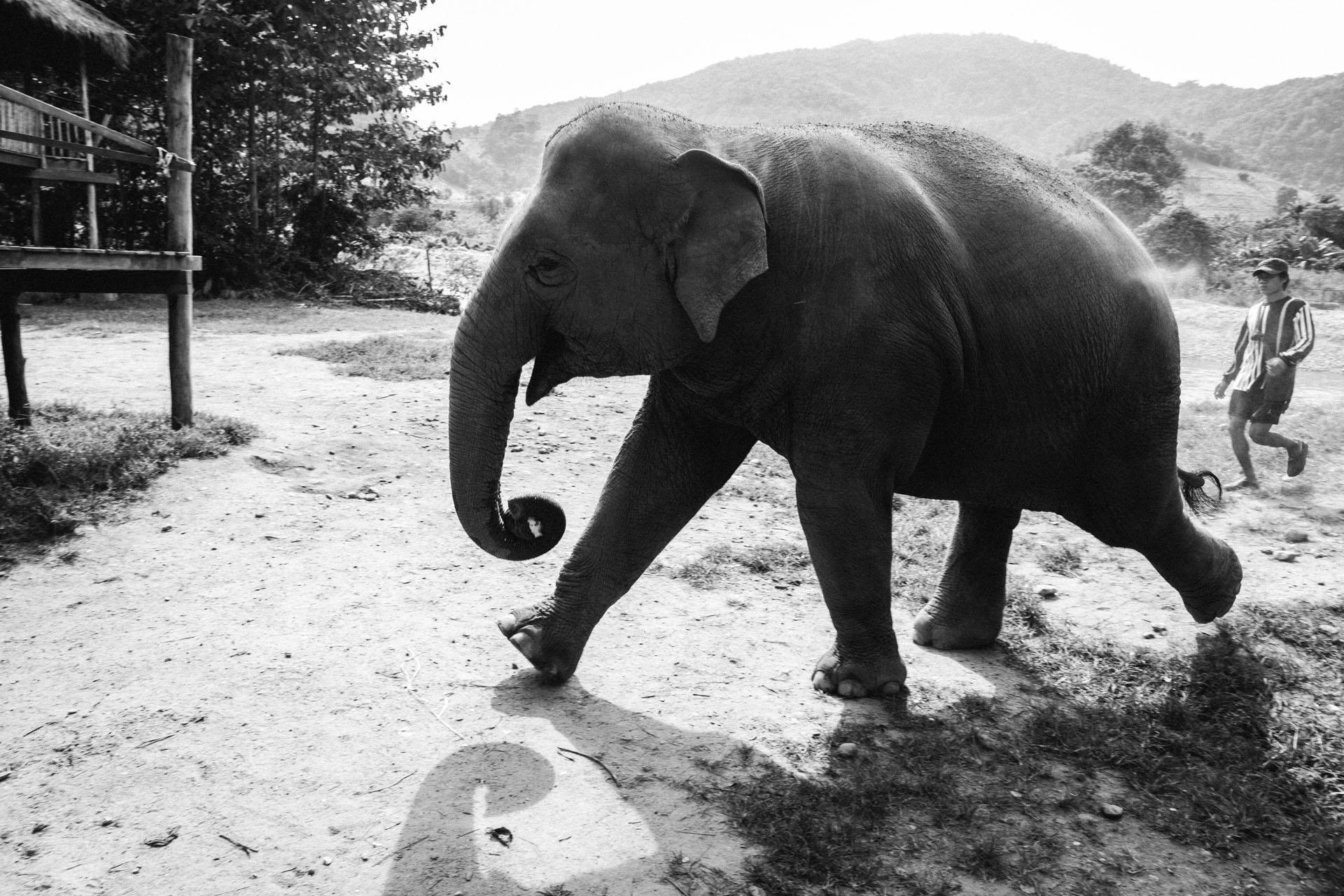 Ren Photography_Elephants_0012.jpg