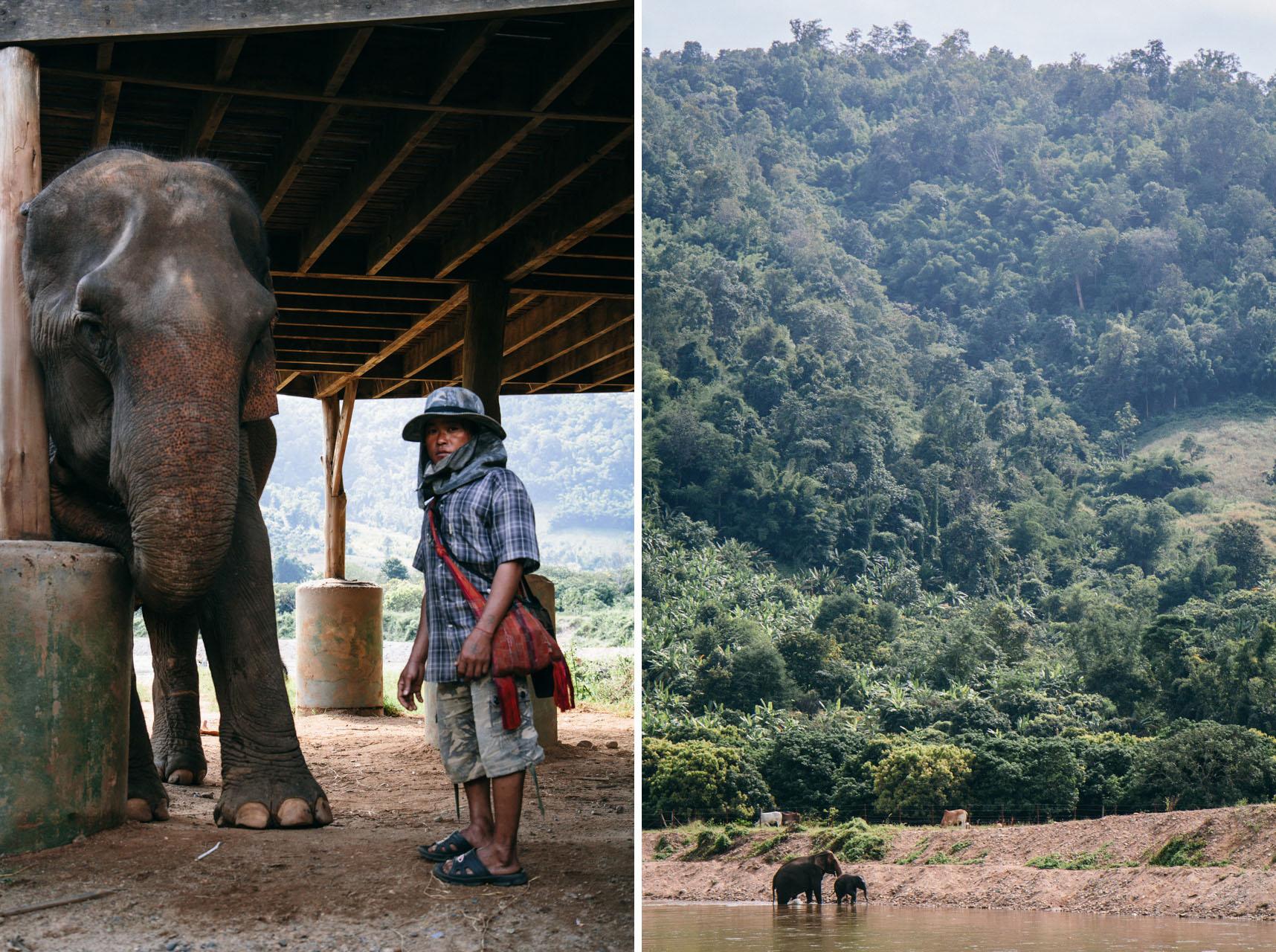 Ren Photography_Elephants_0013.jpg