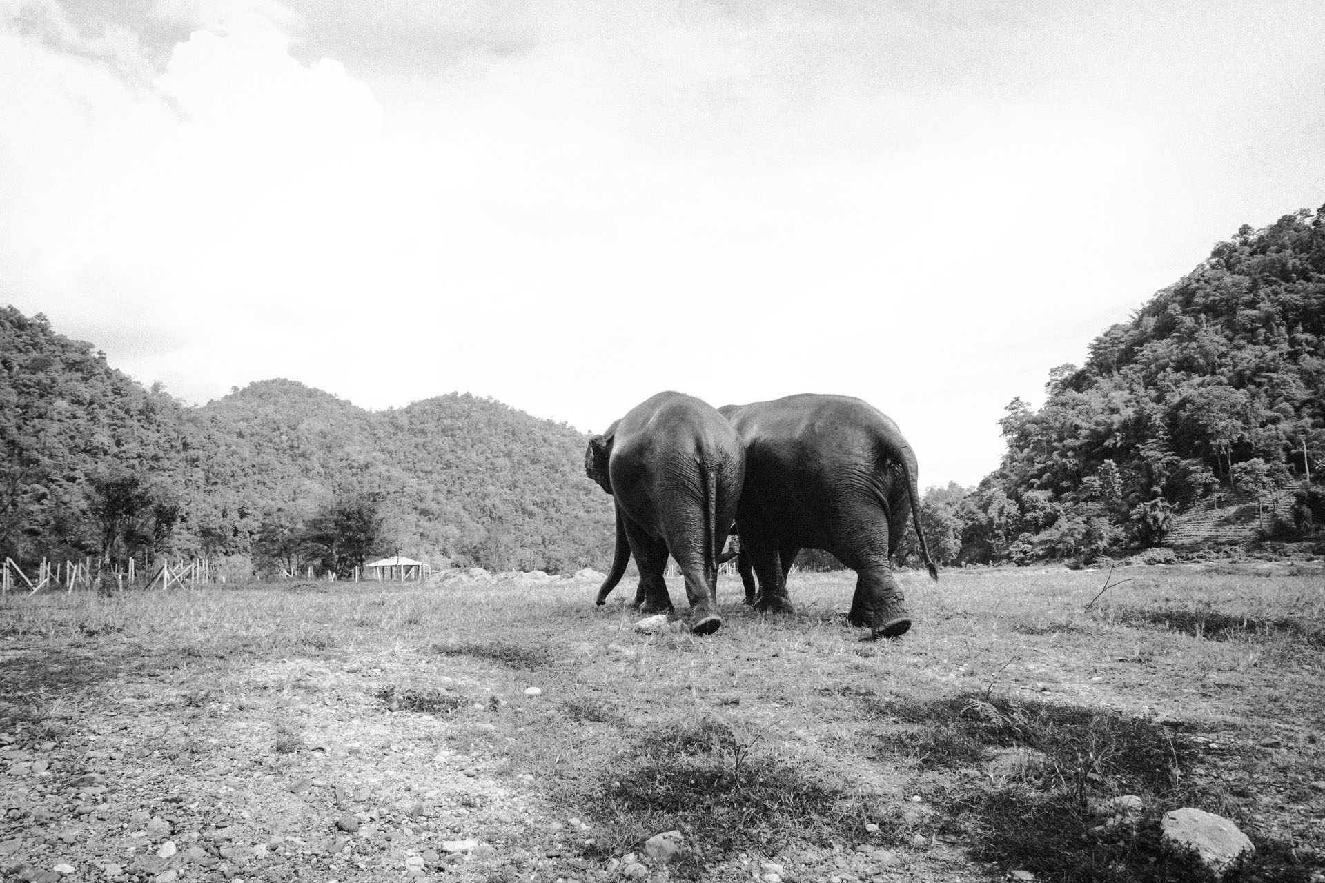 Ren Photography_Elephants_0014.jpg