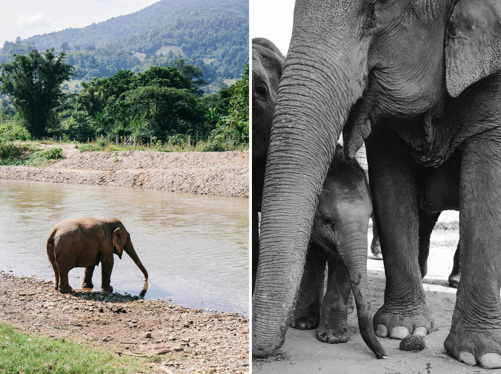 Ren Photography_Elephants_004.jpg