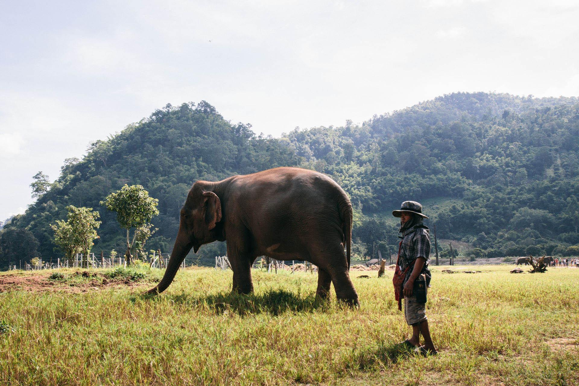 Ren Photography_Elephants_005.jpg