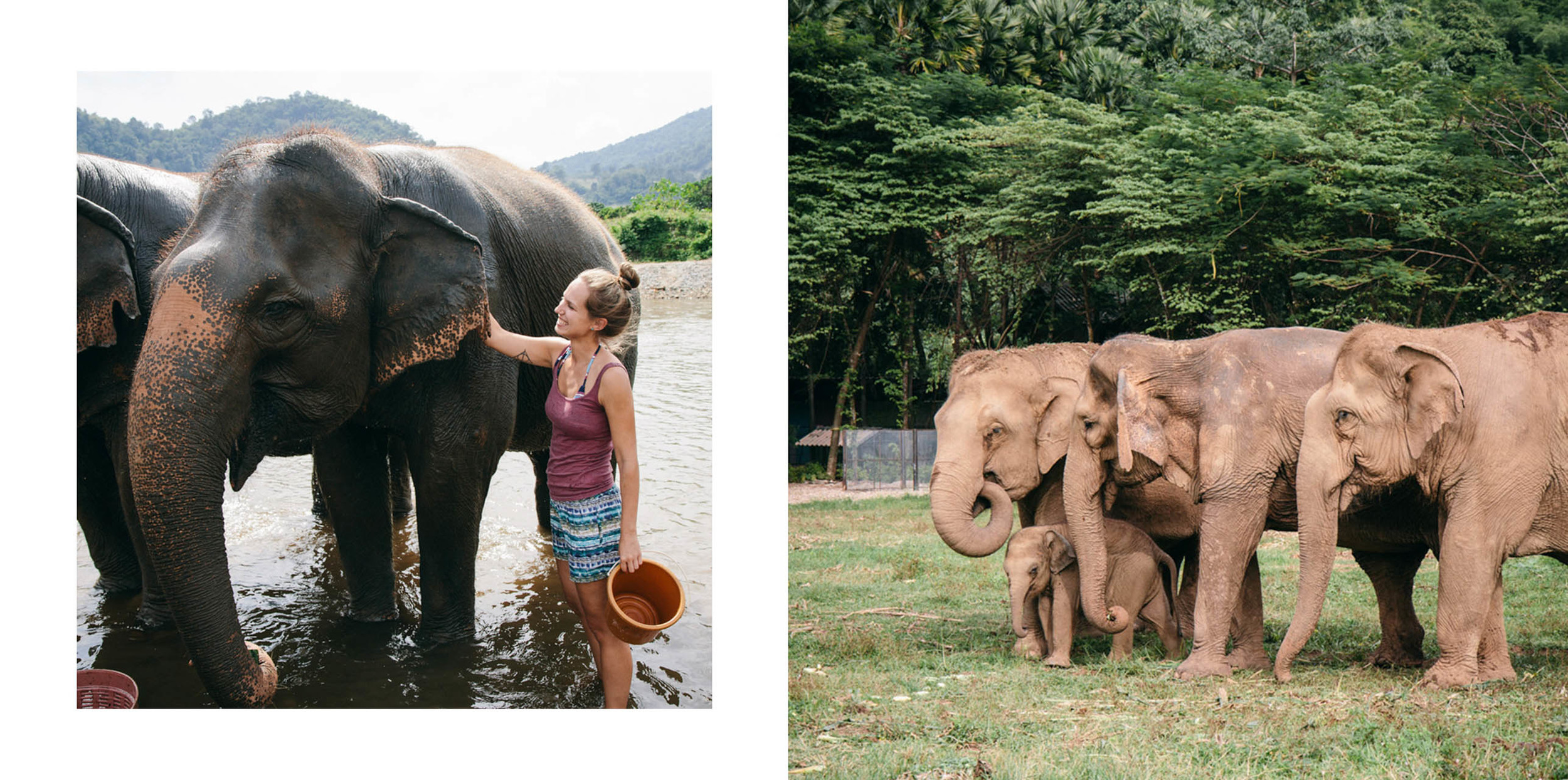 Ren Photography_Elephants_00b.jpg