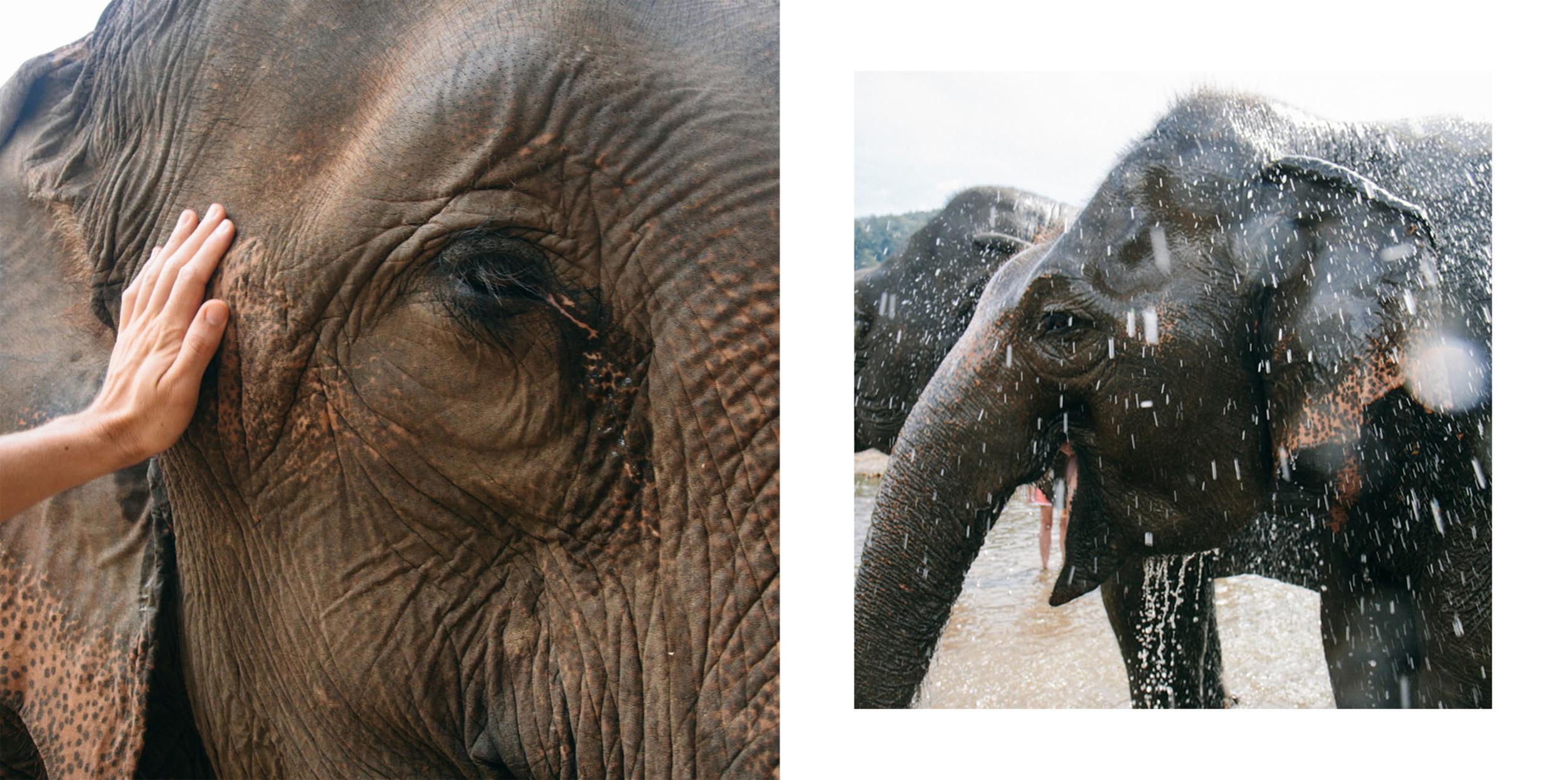 Ren Photography_Elephants_00a.jpg
