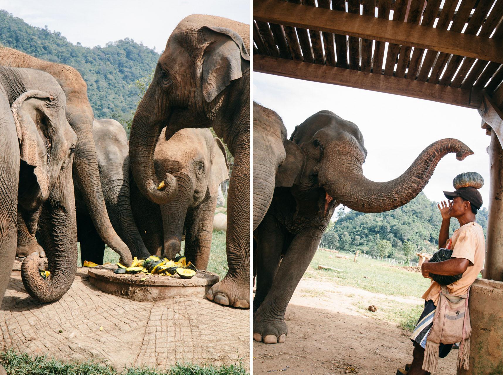Ren Photography_Elephants_0010.jpg