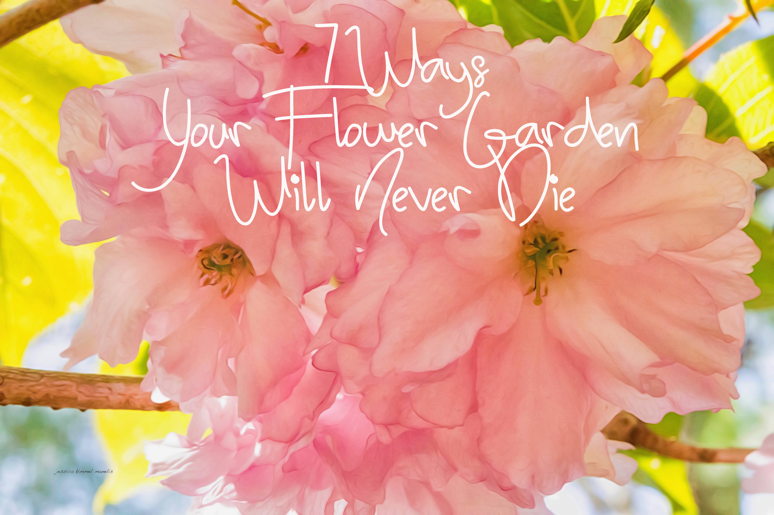 7 Ways your flower garden will never die.jpg