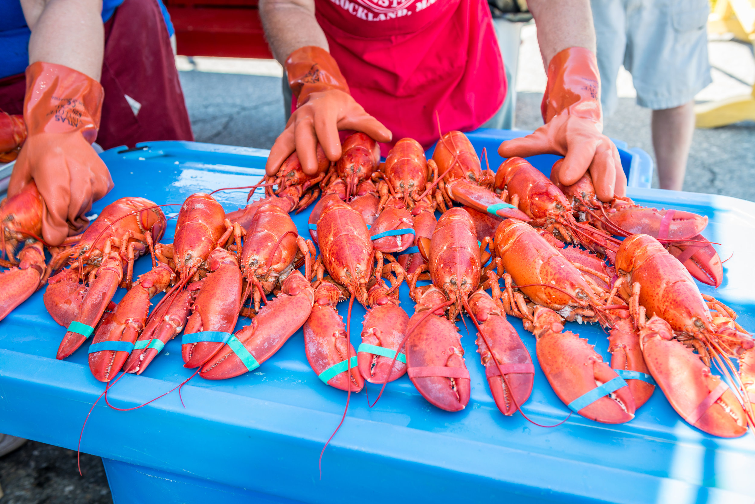 Maine Lobster Festival - July 31st - August 5th