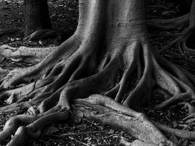 Roots..jpg