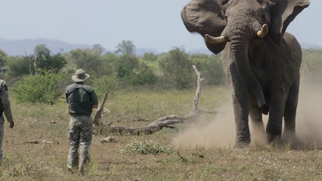 a large elephant bull checks us out - after this he simply turned and walked away back to his pathway to water !