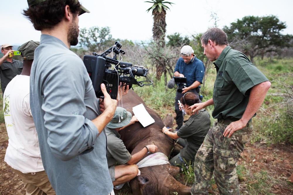 microchipping rhino on zululand rhino reserve -cameramen branlin