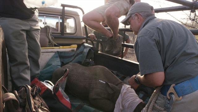 Rhino Ivan 8.jpeg