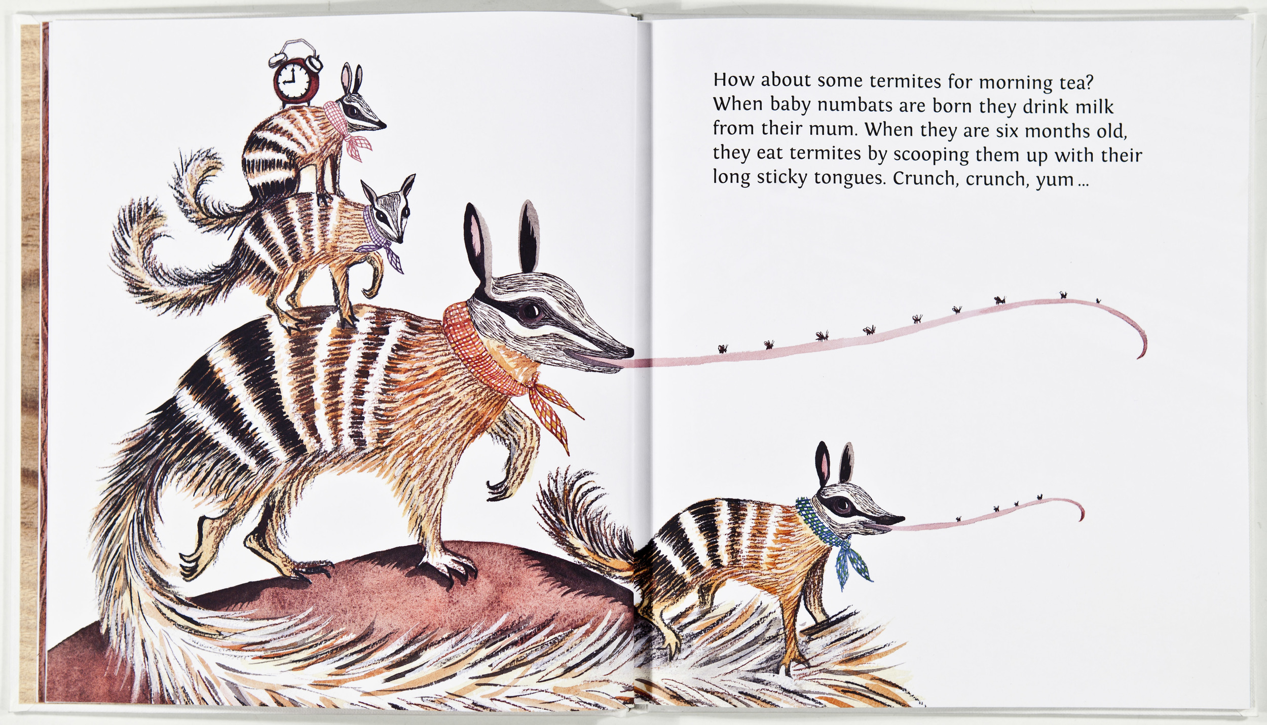 The Numbat family (actual page) The Famiy Hour in Australia.