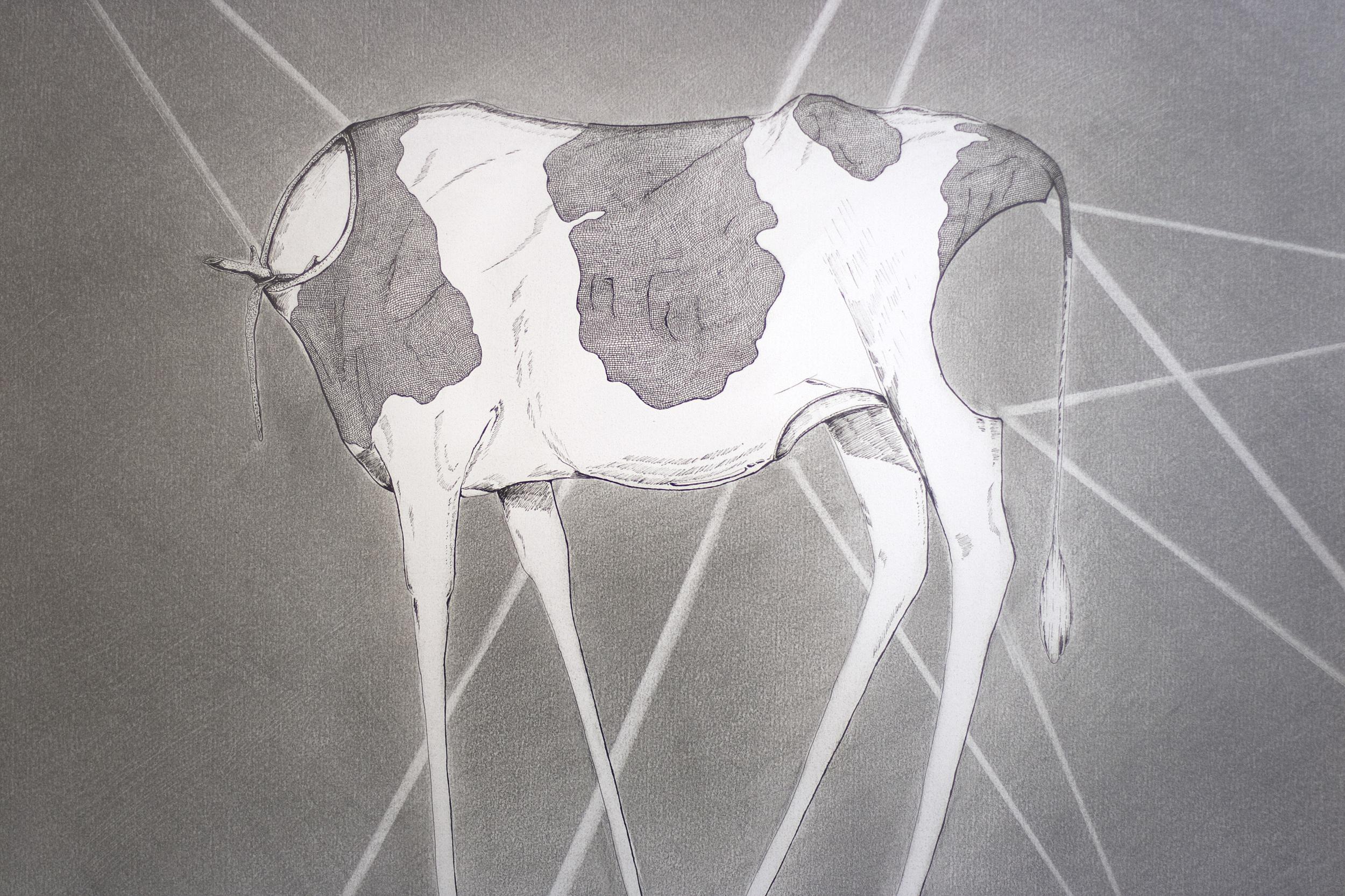 Cow_Mutilation Antlers2_50x46cm.jpg
