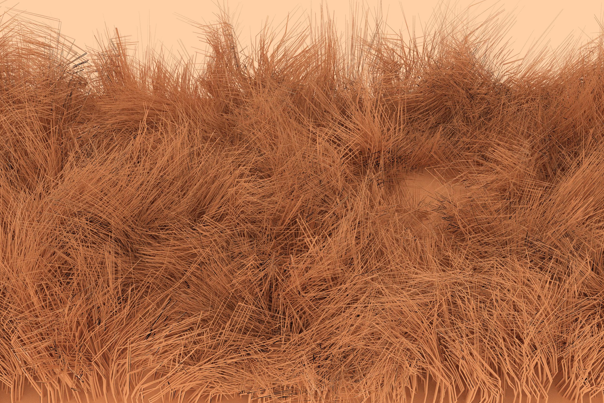 grassautum.jpg