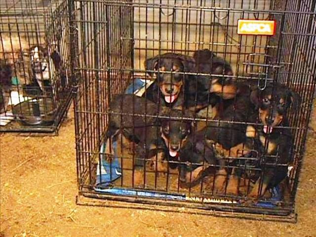 WXOW News: Buyer Beware, don't buy puppy mill dogs