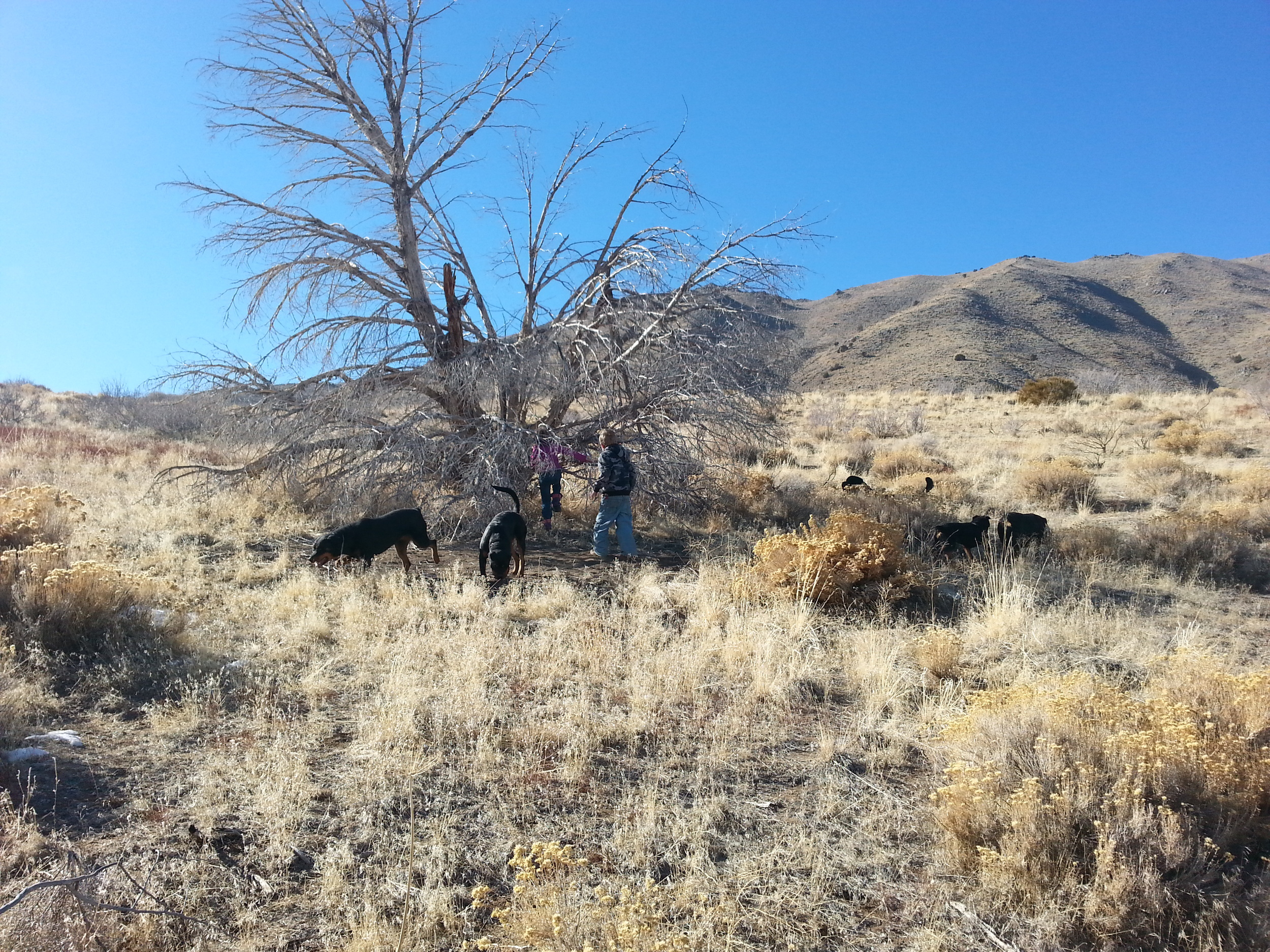 Wearing out on a hike and looking for shade under an old Juniper.