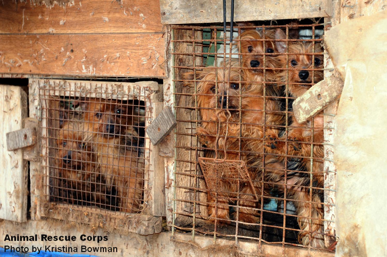 AnimalRescueCorps.org: Puppy Mills
