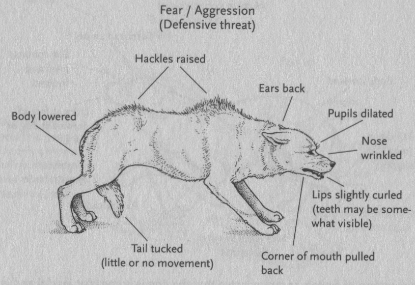 This image from  The Balanced Canine  shows us signs a fearful agressive dog may show if they are suspecious, have been poorly socialized, are afraid or are naturally agressive.